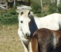 Early inspiration during childhood encounters with relative's ponies.